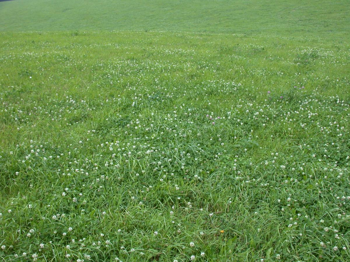 Forage mixture image