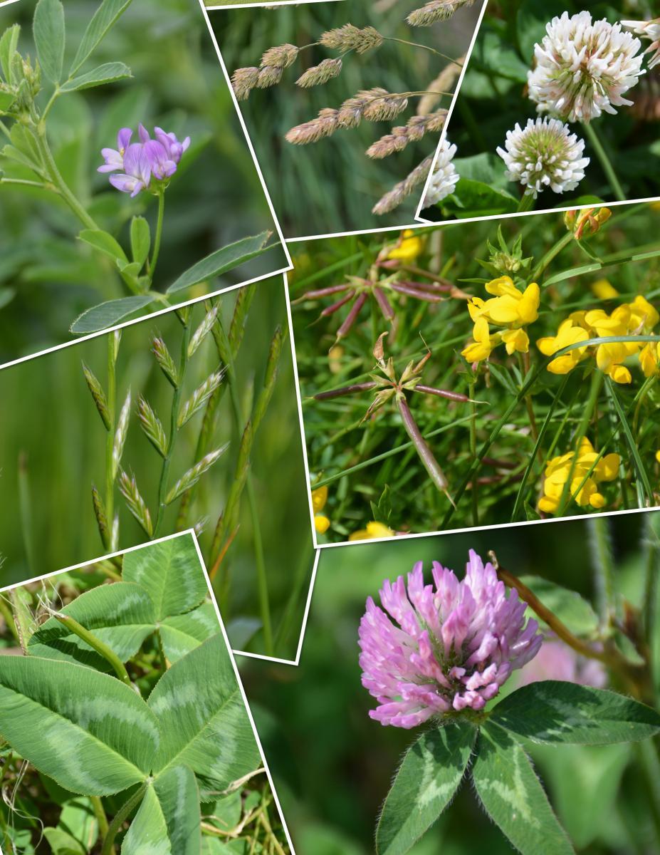 Forage species collage