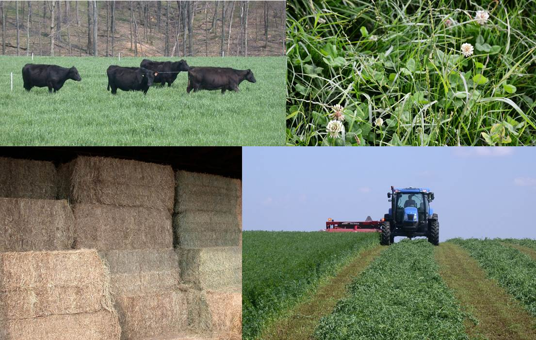 Forage management collage image