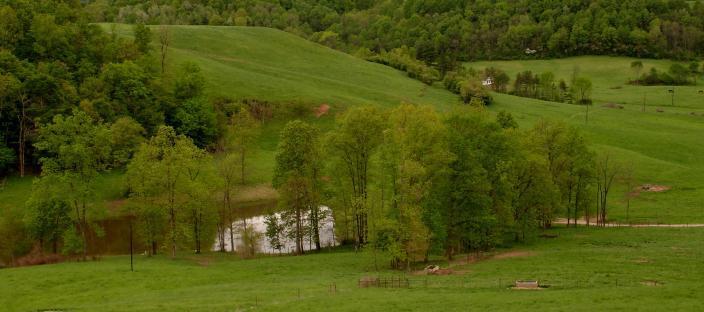 Pasture scene