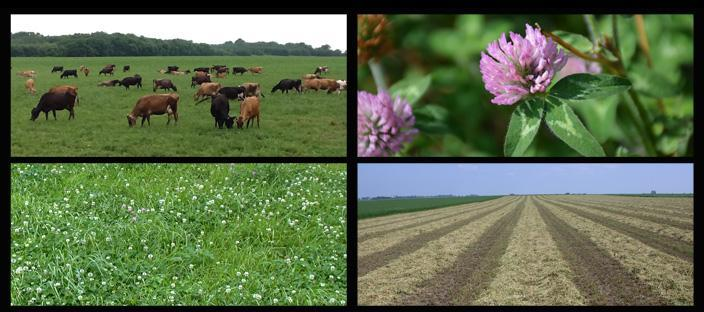 Welcome to the new and improved Ohio Forages Website!