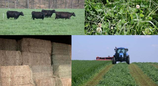 Forage summer field days are planned!