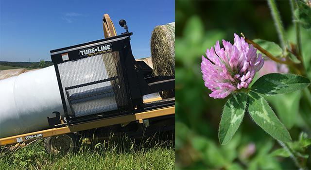 Baler and red clover plant