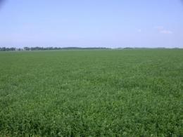 Good fertilization practices ensure good forage production