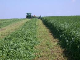 Alfalfa being harvested