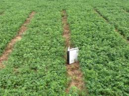 Alfalfa variety trial