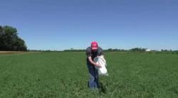 Scouting for Potato Leafhopper in Alfalfa